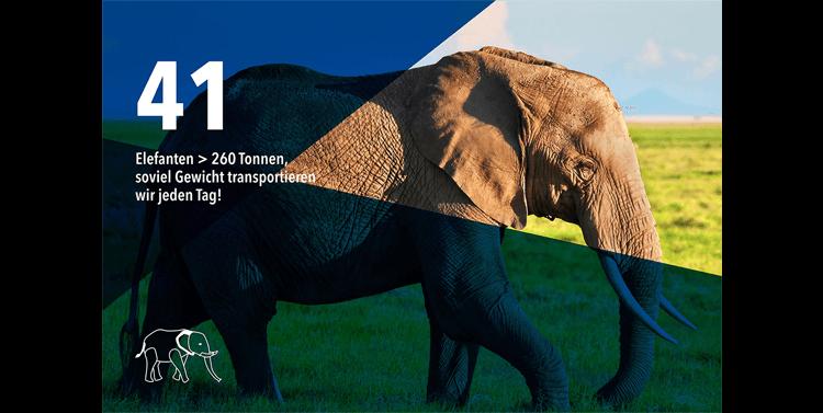 bischofberger-transporte-vorarlberg-leistungen-elefanten